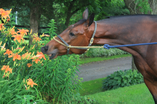 Blairwood Farms Horse smells all the flowers