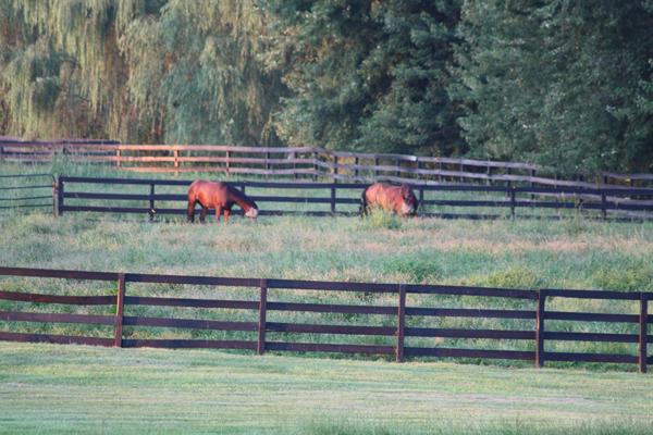 Blairwood Farms horses eating