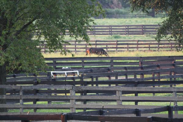 Blairwood Farms Horse Boarding