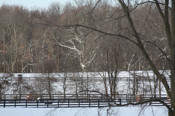 Snow at Blairwood Farms