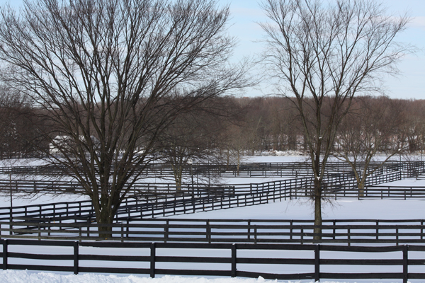 Blairwood Farms Winter-scape