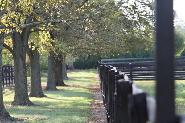 Blairwood Farms tree lined fences