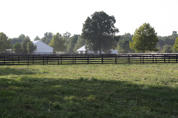 Beautiful day for the horses at Blairwood Farms