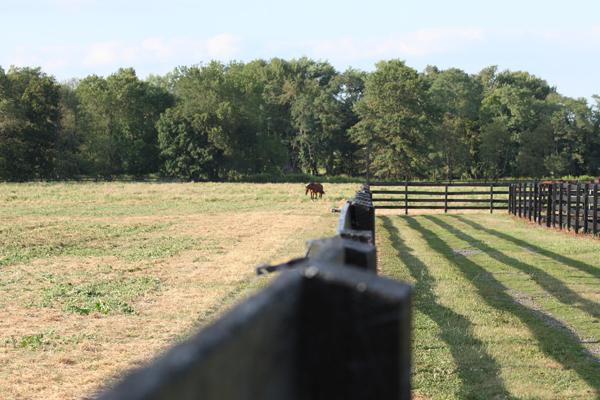 Horse grazes at Blairwood Farms
