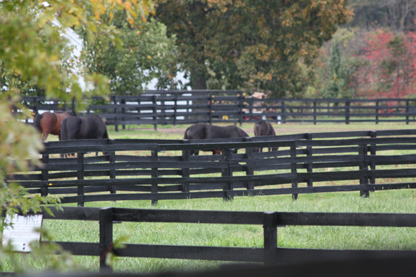 Horses at Blairwood Farms grazing on some food
