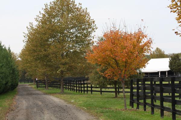 Fall foliage at Blairwood Farms