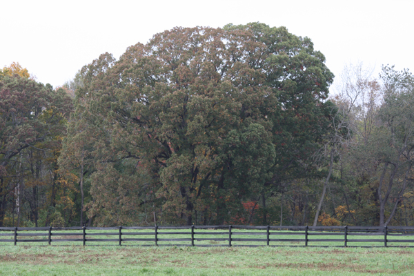 Getting ready for fall at Blairwood Farms
