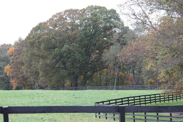 Green grassy field Blairwood Farms NJ