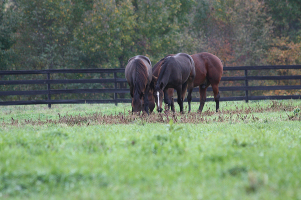 Snack time at Blairwood Farms New Jersey