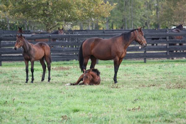 Mom and baby horses at Blairwood Farms