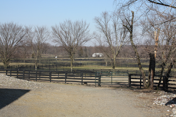 Winter trees Blairwood Farms
