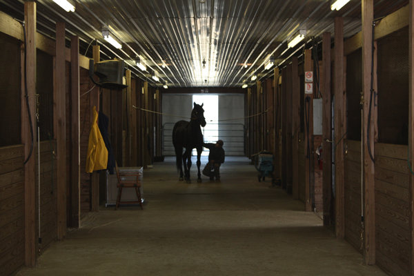 We take good care of our horses!